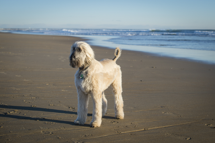 dogs salisbury spirit-3632