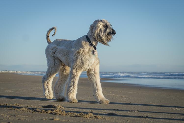 dogs salisbury spirit-3639