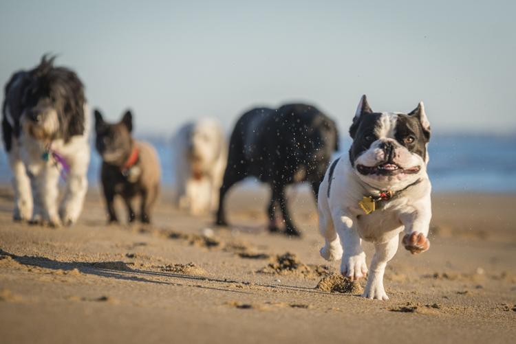 dogs salisbury sunrise-5666