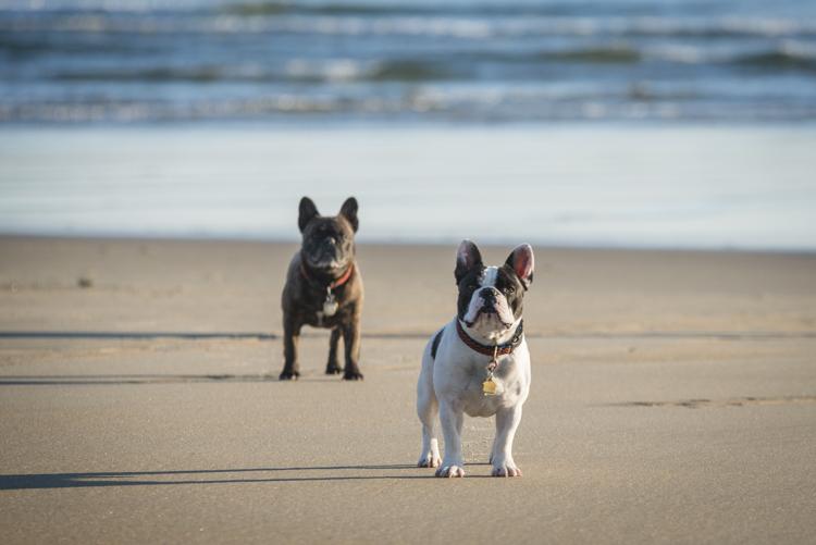 dogs salisbury sunrise-5725