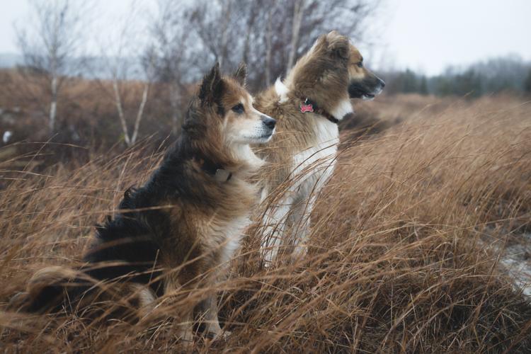 fury and loki