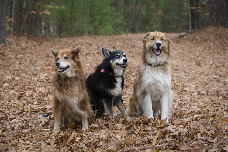 fury, allie, and loki
