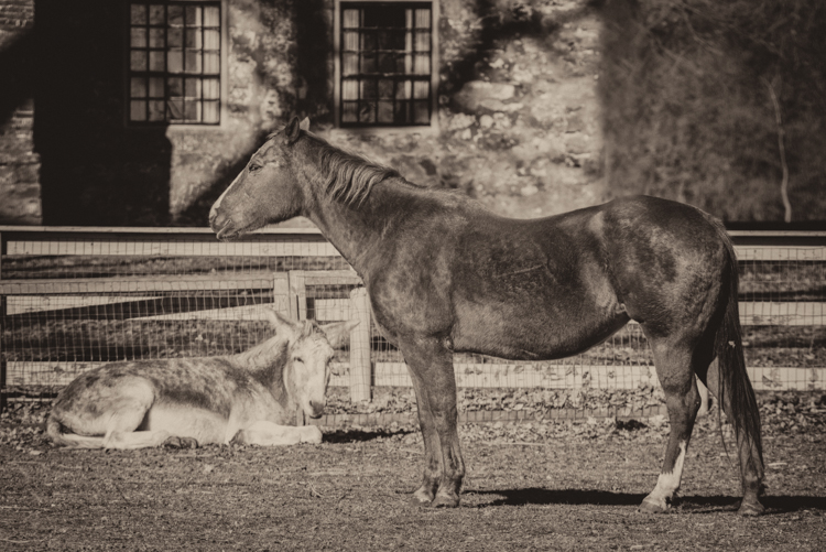 mike roy, dogs, Red, uka, splf-9212-Edit-Edit