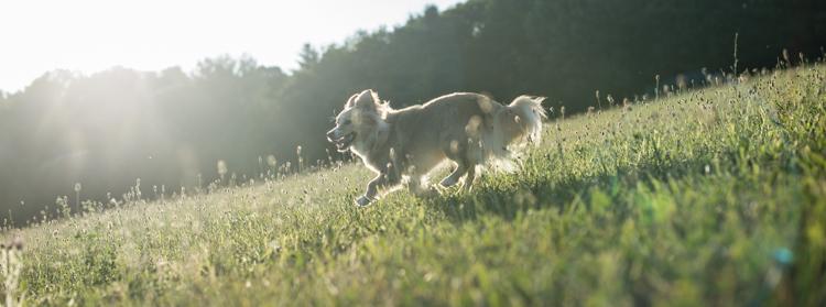 splf, dogs, scout-7554