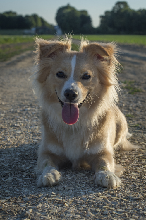 splf, dogs, scout-7568