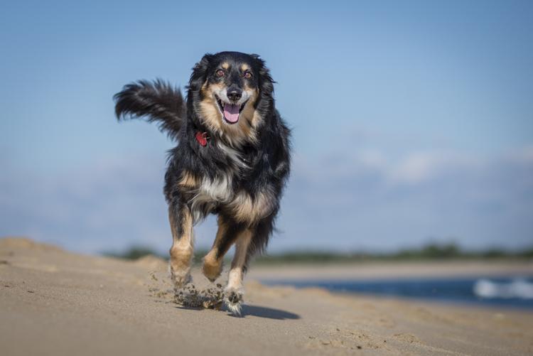 dogs-stella-echo-9105
