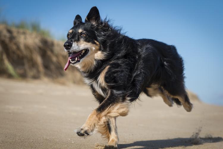 dogs-stella-echo-9133-edit