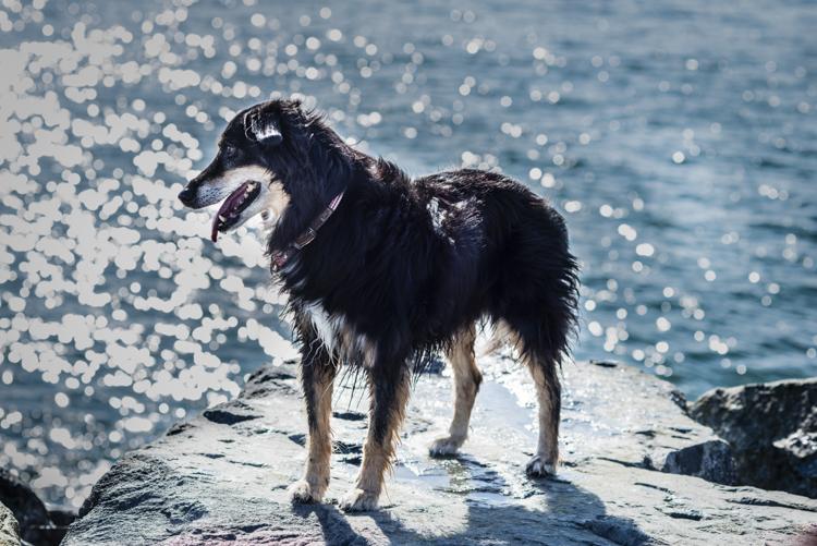 dogs-stella-echo-9196-edit