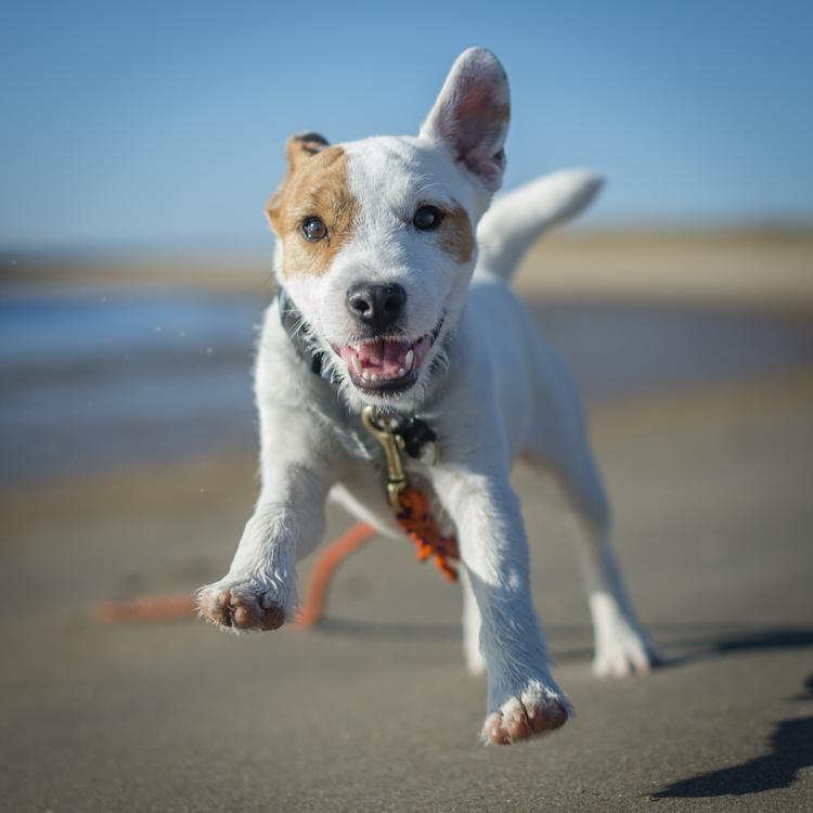 dogs-salisbury-beach-0525