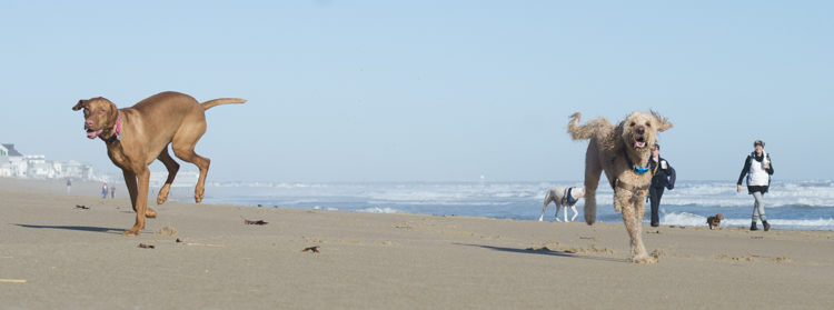 dogs-salisbury-beach-0583