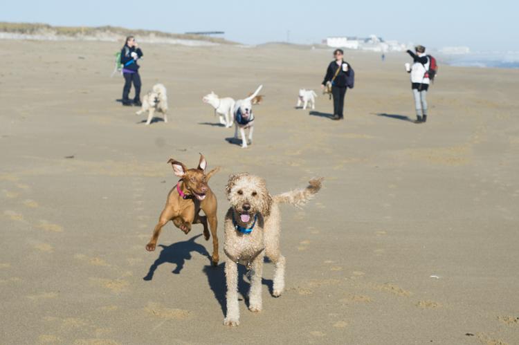 dogs-salisbury-beach-0601