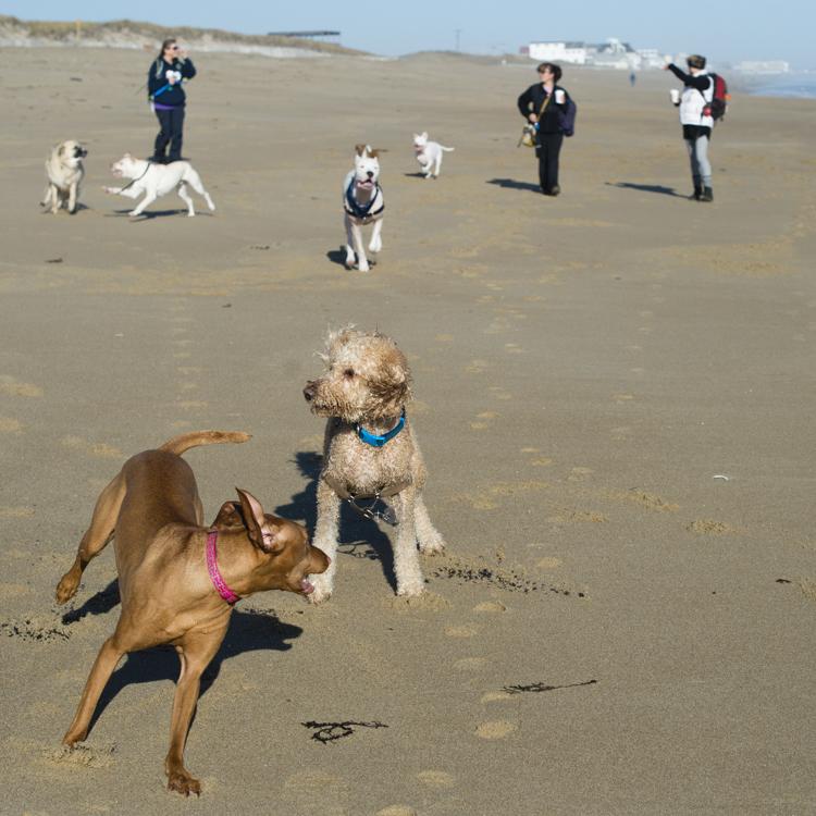 dogs-salisbury-beach-0602