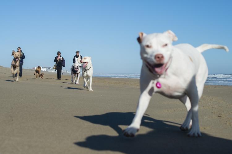 dogs-salisbury-beach-0603
