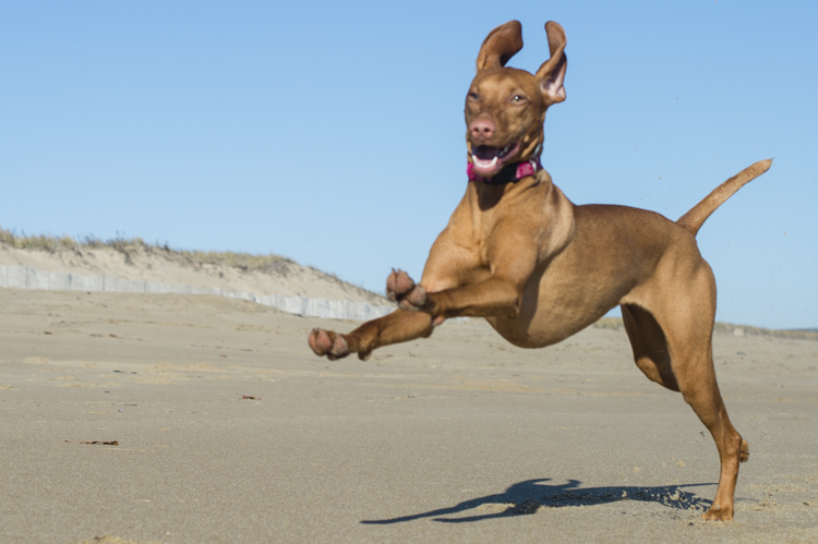 dogs-salisbury-beach-0607