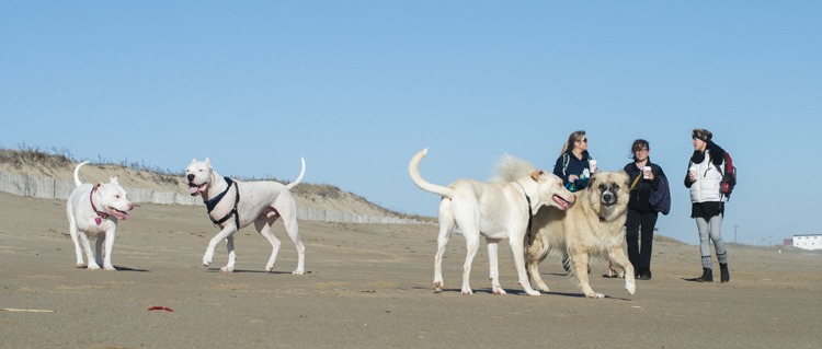 dogs-salisbury-beach-0610