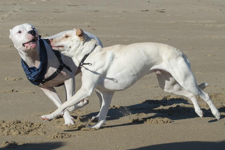 dogs-salisbury-beach-0622