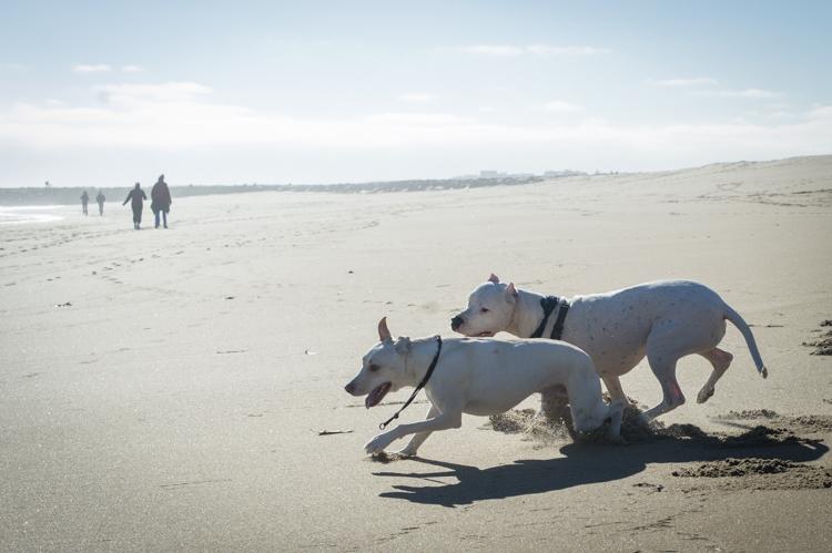 dogs-salisbury-beach-0624