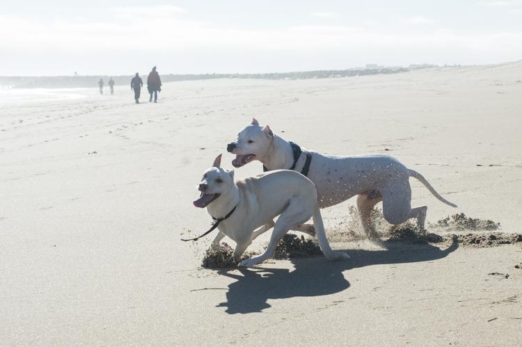 dogs-salisbury-beach-0625