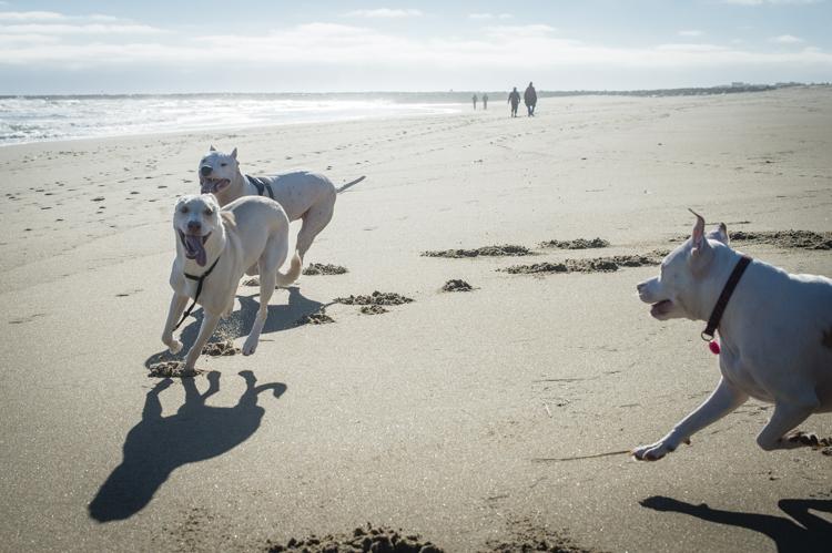 dogs-salisbury-beach-0627
