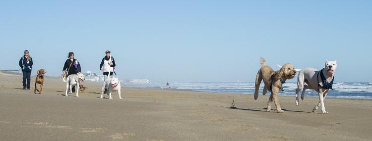 dogs-salisbury-beach-0630