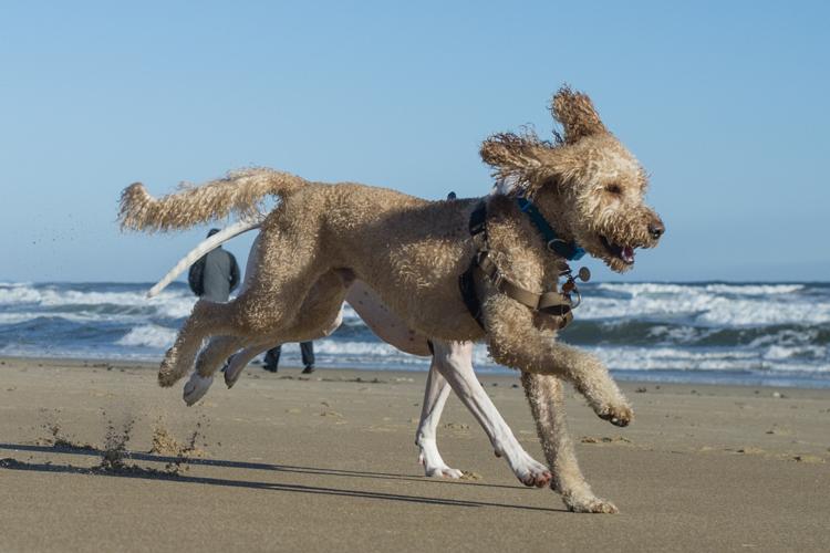 dogs-salisbury-beach-0632