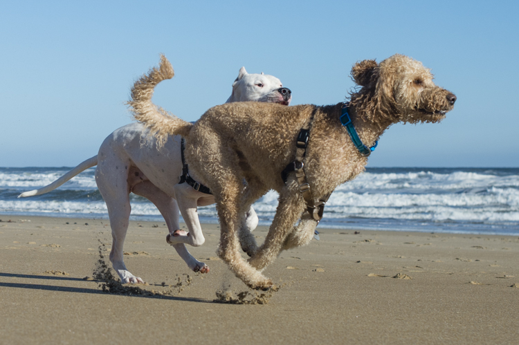 dogs-salisbury-beach-0633