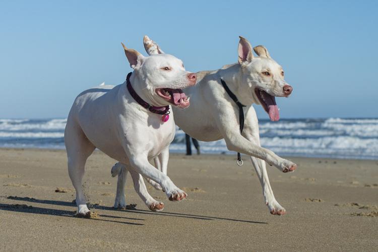 dogs-salisbury-beach-0637