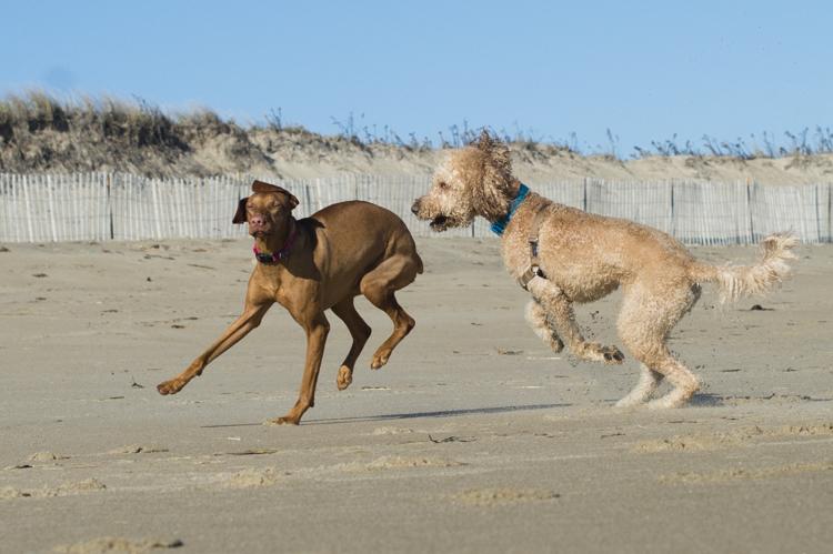 dogs-salisbury-beach-0639