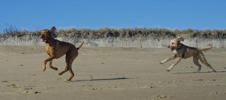 dogs-salisbury-beach-0641
