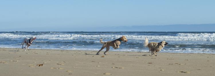dogs-salisbury-beach-0645
