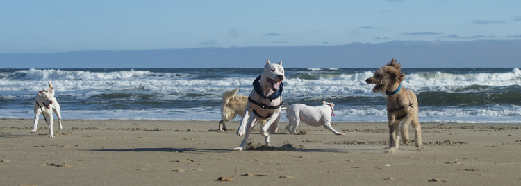 dogs-salisbury-beach-0652
