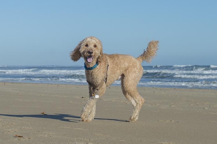 dogs-salisbury-beach-0655