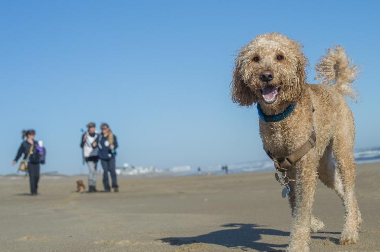 dogs-salisbury-beach-0658