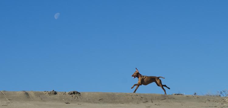 dogs-salisbury-beach-0662