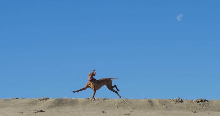 dogs-salisbury-beach-0664