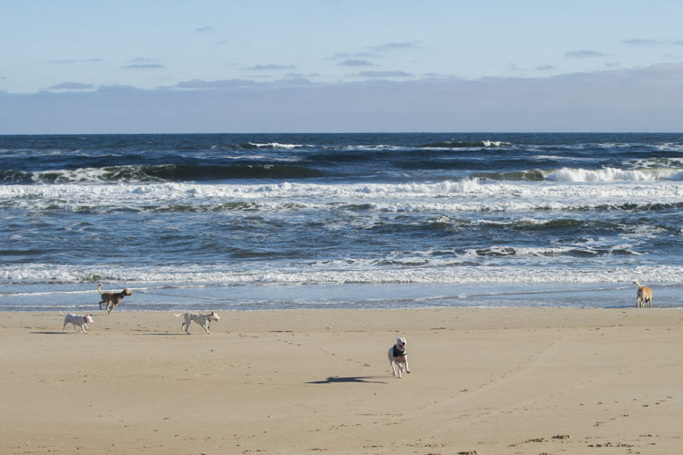 dogs-salisbury-beach-0687