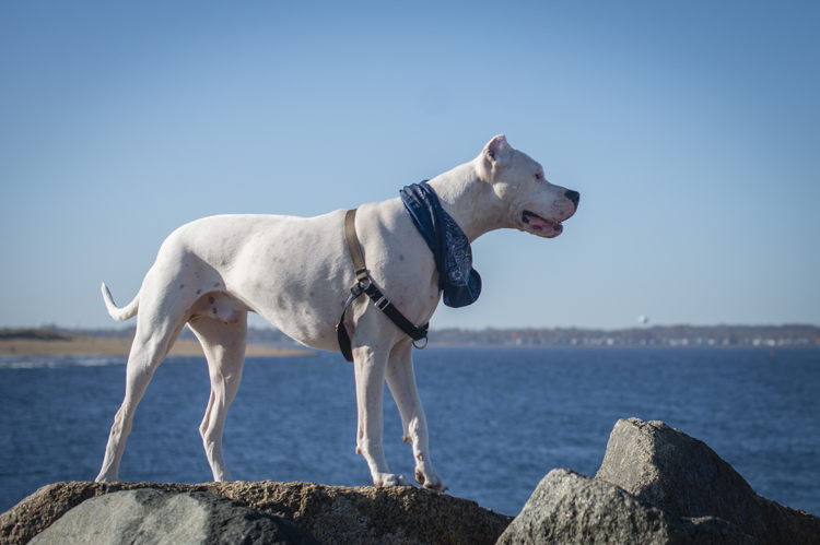 dogs-salisbury-beach-0690