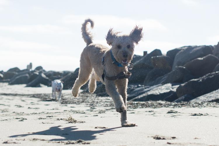dogs-salisbury-beach-0698