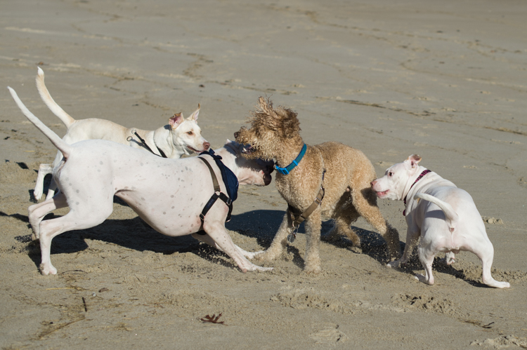 dogs-salisbury-beach-0709