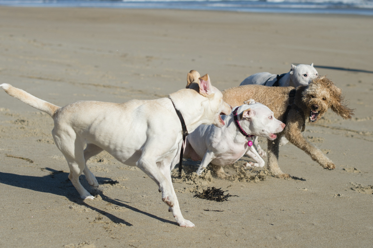 dogs-salisbury-beach-0714