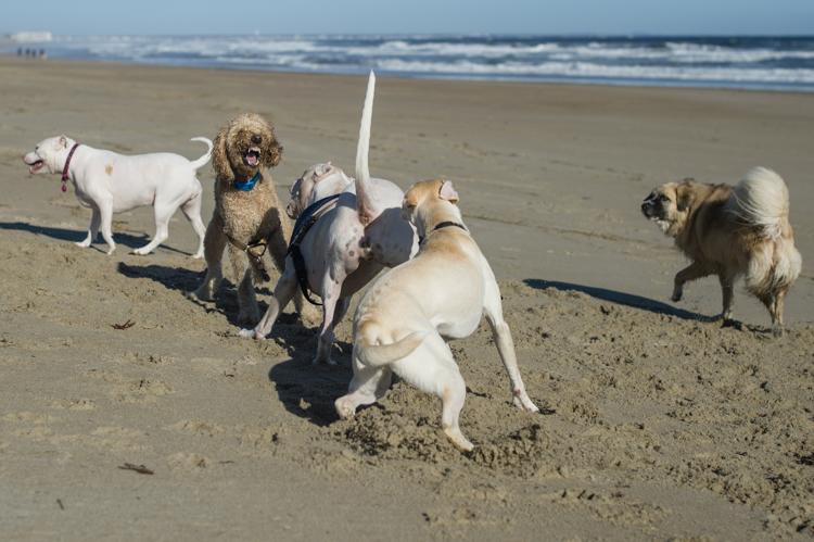 dogs-salisbury-beach-0720