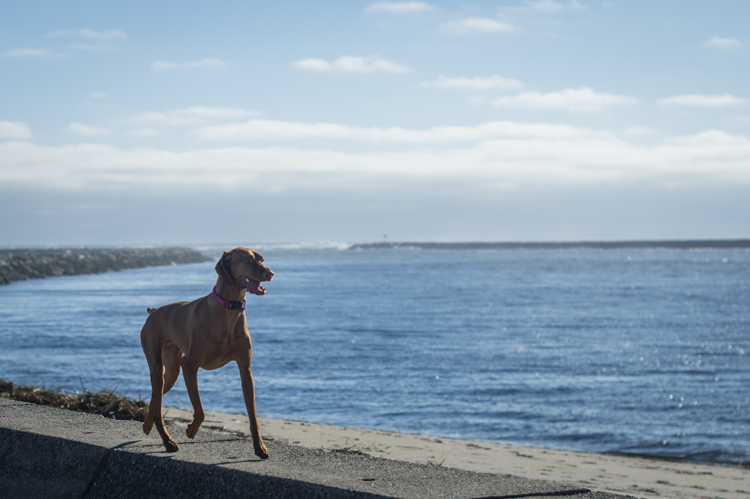 dogs-salisbury-beach-0733