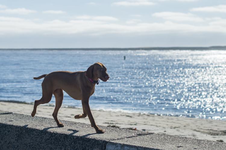 dogs-salisbury-beach-0735