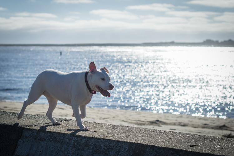 dogs-salisbury-beach-0746