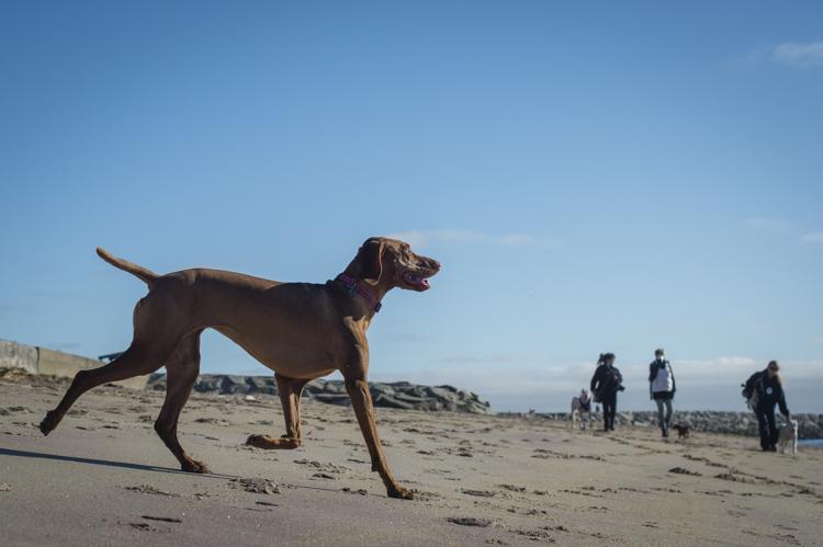 dogs-salisbury-beach-0753