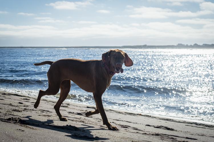 dogs-salisbury-beach-0758