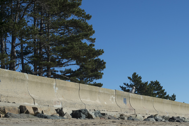 dogs-salisbury-beach-0766