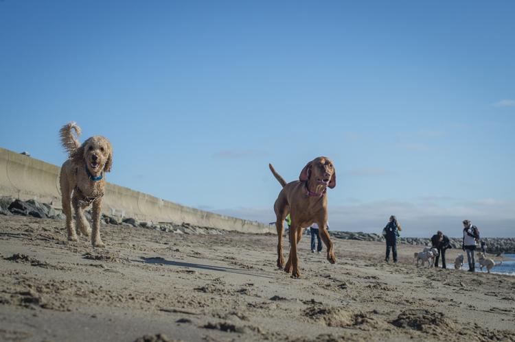 dogs-salisbury-beach-0767
