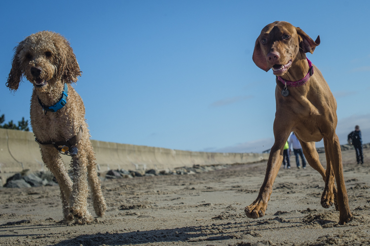 dogs-salisbury-beach-0771