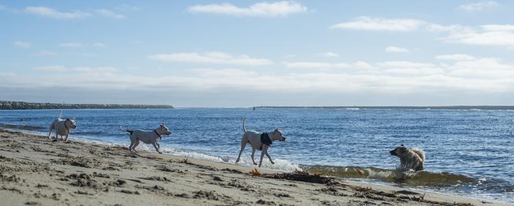 dogs-salisbury-beach-0774